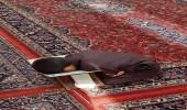 صورة مؤثرة لطفل نائم ووجهه على المصحف في المسجد النبوي