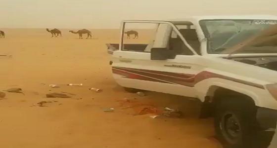 بالفيديو.. العاصفة الترابية تدمر سيارة وكرفان أحد رعاة الإبل