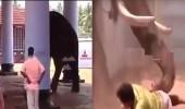 بالفيديو.. لحظة دهس فيل ضخم لرجل حتى الموت