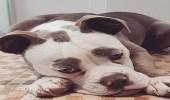 بالصور.. أكثر الكلاب حزنا في العالم