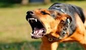 """"""" صحة جازان """" تكشف حقيقة اعتداء كلاب مسعورة على أطفال"""