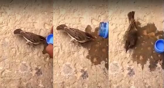 بالفيديو.. نهاية محزنة لعصفور يسقيه أحد الأشخاص