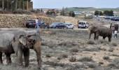 بالصور..إصابات مروعة لأفيال حاولت الهرب بطريق سريع