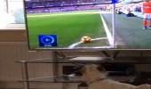 """بالفيديو .. """" أوزيل """" يعتذر إلى كلب بسبب لقطة من مباراة"""