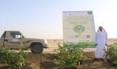 بالصور.. مكتب وزارة البيئة بالليث يدشن المرحلة الأولى لتشجير طريق الساحل
