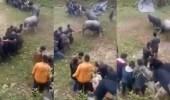 بالفيديو.. ثوران يسحقان رجلا بين قرونهما بطريقة مروعة