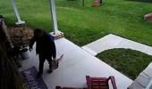 بالفيديو.. ظل شبح كلب يتسلل خلف رجل أمام باب منزل
