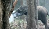 """بالفيديو.. أول تفسير علمي لواقعة """" الفيل المدخن """" بالهند"""