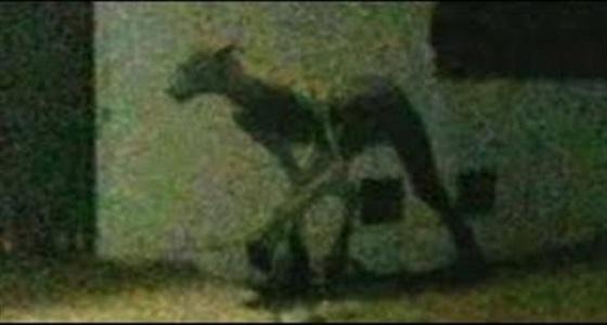 بالفيديو.. مخلوق غريب نصفه إنسان والآخر حيوان يثير الرعب بين الأهالي