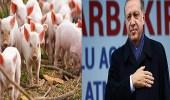 بموافقة أردوغان.. تركيا تستعد لاستيراد لحم الخنزير من البوسنة والهرسك