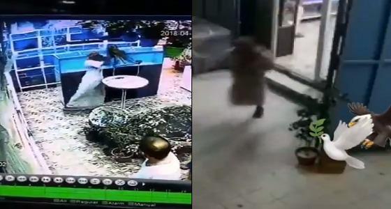 """بالفيديو.. لصان يسرقان """" مكاو """" من محل لبيع الطيور"""