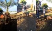 بالفيديو.. ضرب وحشي لحصان بعصا حديدية