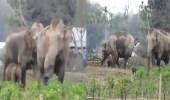 بالفيديو.. أنثى فيل تنقذ صغيرها من الغرق