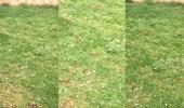 بالفيديو.. حبات البرد تنهمر على مسطحات خضراء بالرياض في مشهد ساحر