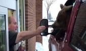 بالفيديو.. دب يتنقل داخل سيارة لتناول الآيس كريم