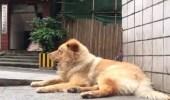 بالفيديو.. كلب مخلص ينتظر صاحبه 12 ساعة يوميا في محطة مترو