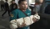 رجل يعض طفله الصغير حتى الموت