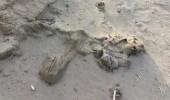 """بالصور.. جثث الحوثيين منتشرة في صحراء """" ميدي """" اليمنية"""