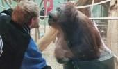 بالفيديو.. إنسان الغاب يقلد شابا ويمنحه قبله
