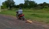 بالفيديو.. رجل يسحل كلبا خلف دراجته النارية لتدريبه