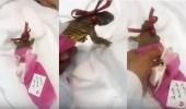 """بالفيديو.. مواطن يضع """" ضبًا """" في بوكية ورد ويهديه لطفل مريض"""