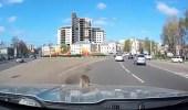 بالفيديو.. رد فعل صادم لسائق تجول فأر على مقدمة سيارته