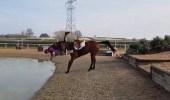 بالفيديو.. لحظة سقوط فتاة من على ظهر حصان في بحيرة