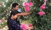 بالفيديو.. رجل رومانسي يبني حديقة مساحتها 1300 متر لزوجته