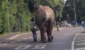 بالفيديو .. فيل يفاجئ سكان مدينة ألمانية بتجوله بينهم في الشارع