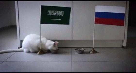 """على طريقة الأخطبوط بول.. القط الأصم """" أخيل """" يرشح المنتخب للفوز على روسيا"""