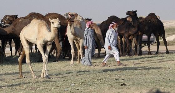قطر تستغيث بإيران لتأجير مراع للمواشي القطرية بعد شروط سلطنة عمان