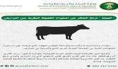 """"""" البيئة """" ترفع الحظر عن استيراد الفصيلة البقرية من البرازيل"""