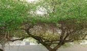 مبادرة زراعة مليوني شجرة سدر برجال ألمع تستقطب العديد من المتطوعين