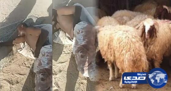 بالفيديو.. فطرهم برمضان وسرقوه في شوال اثيوبيون يسرقون غنم مواطن