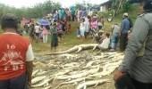 """عقابًا لهم.. ذبح 292 تمساحًا بعد وفاة رجل إثر """" عضة """""""