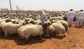 أمانة الرياض تكشف عن متوسط أسعار الأضاحي بالمنطقة