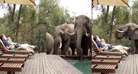 بالفيديو.. 3 أفيال يفاجئون زوجين أثناء جلسة استجمام حول حمام سباحة