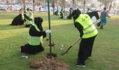 بالصور.. 3665 شجرة تم غرسها في 20 موقع بمشاركة 1000 متطوع ومتطوعة