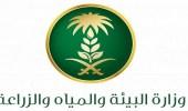 لجنة سوق الحطب بالمدينة المنورة تضبط مواقع مخالفة