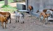 طرق التخلص من الكلاب الضالة دون استخدام الطعوم السامة