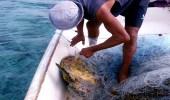 بالصور.. ضبط قارب مخالف لنظام حماية الثروة المائية بالقنفذة