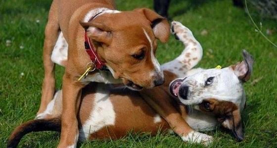 فضت عراك بين كلبين.. واكتشف المفاجئة الصادمة