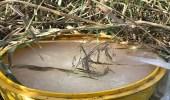 ضبط مصنعًا للخمور تديره عمالة إثيوبية بخميس مشيط