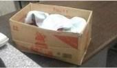 """تونس.. تسليم جثامين الرضع المتوفين في """" علب كرتونية """""""