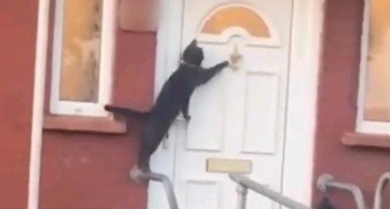 بالفيديو.. قطة تطرق الباب عدة مرات للحصول على إذن دخول المنزل