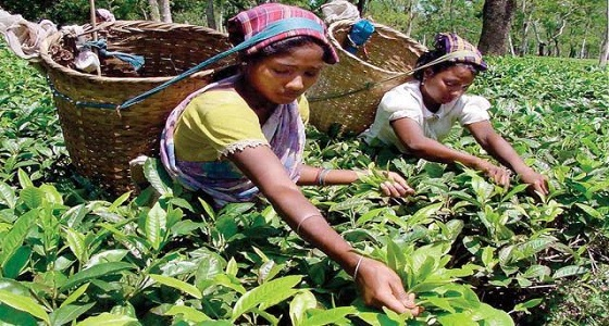9 حقائق مثيرة للاهتمام عن سريلانكا