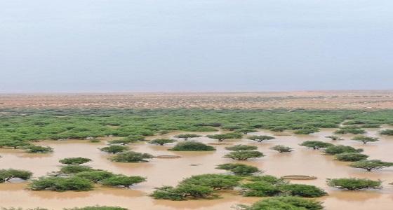 بالفيديو.. مناظر طبيعية خلابة لبحيرات وأشجار السدر بروضة الخشم شمال الرياض