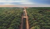 الأحساء.. واحة النخيل التي تعد أكبر الواحات في العالم و تلقب بـ بحر النخيل (صور)