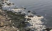 """تعليق """" الأرصاد """" على نفوقمئات الأسماك في بحيرة سيهات"""