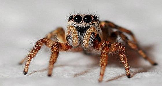شاب يربي عنكبوتاً للتخلص من حماته